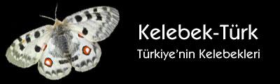 Kelebek-Türk